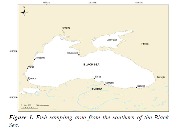 fisheries-research-southern-Black