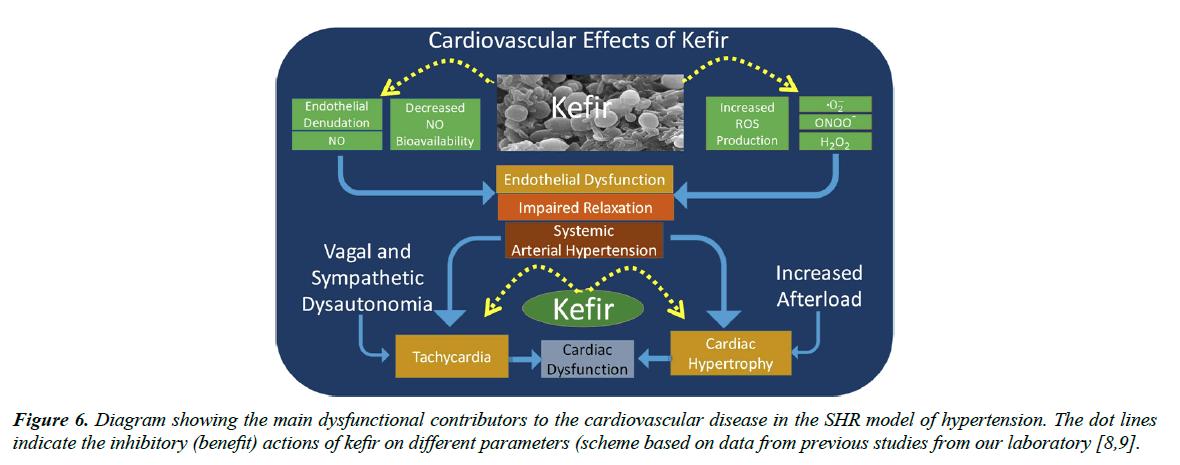 food-microbiology-cardiovascular-disease