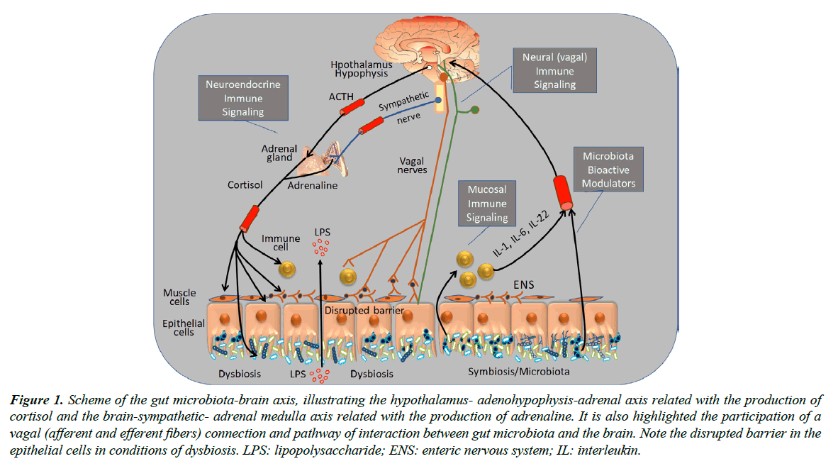 food-microbiology-microbiota-brain