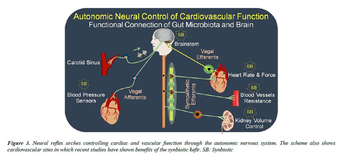 food-microbiology-vascular-function