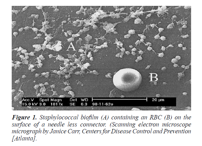 food-science-nutrition-staphylococcal-biofilm