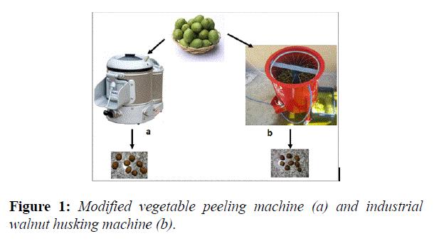 food-technology-vegetable-peeling-machine