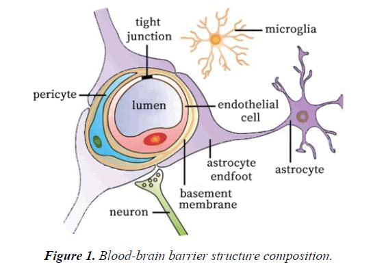 general-internal-medicine-barrier-structure