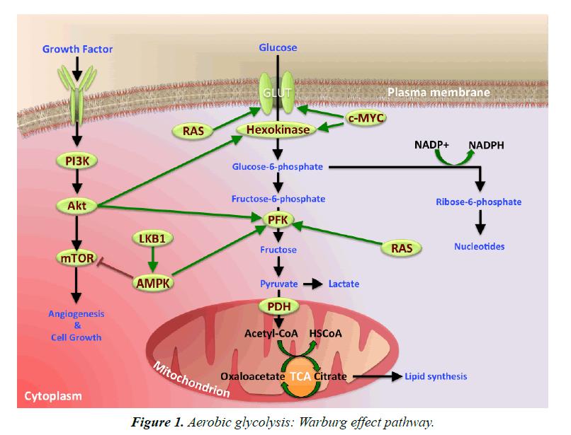 general-internal-medicine-effect-pathway
