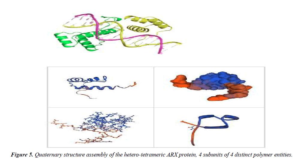 genetics-molecular-biology-hetero-tetrameric