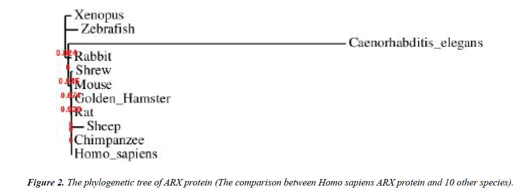 genetics-molecular-biology-phylogenetic-tree
