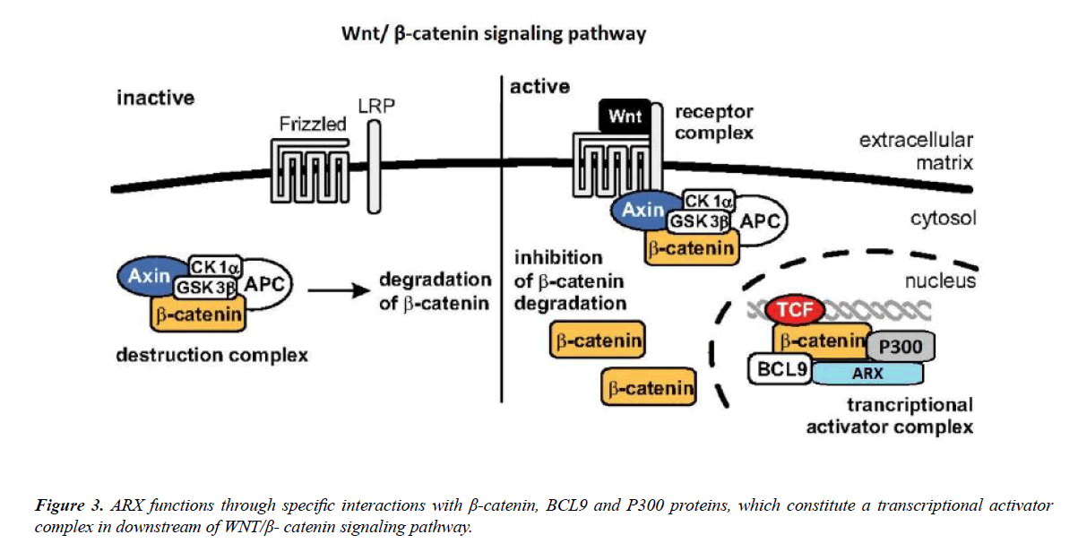 genetics-molecular-biology-signaling-pathway