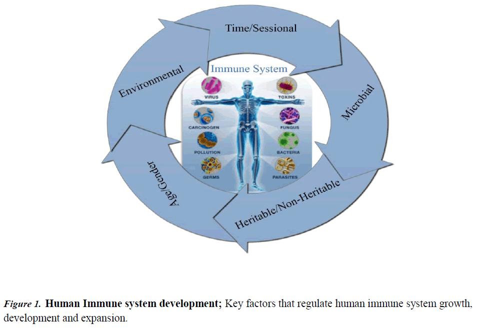 immune-system-Immune-system