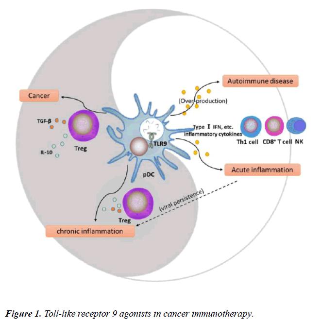 immune-system-disorders-Toll-like-receptor