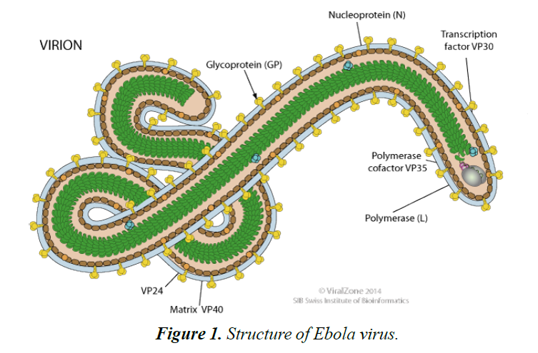 infectious-diseases-medical-microbiology-ebola-virus