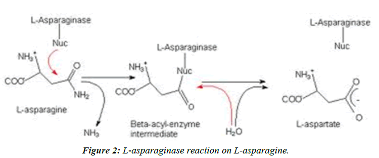 journal-biotechnology-phytochemistry-L-asparaginase-reaction