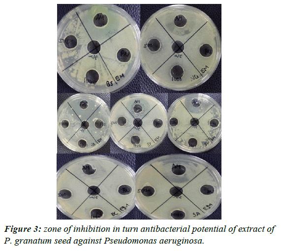 journal-biotechnology-phytochemistry-Pseudomonas-aeruginosa