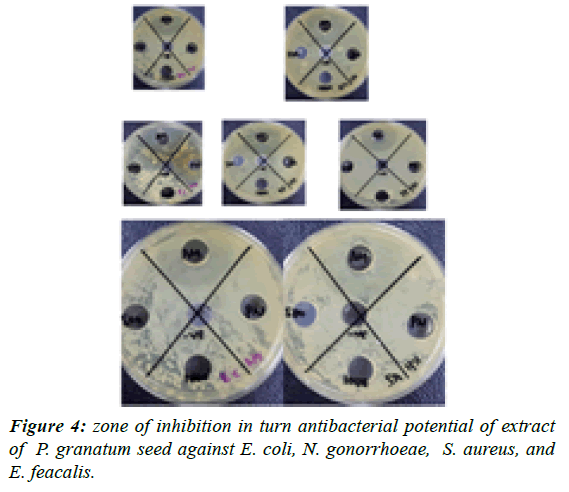 journal-biotechnology-phytochemistry-turn-antibacterial