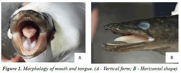 journal-fisheries-research-Horizontal-shape