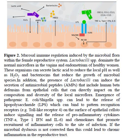 medical-research-Mucosal-immune