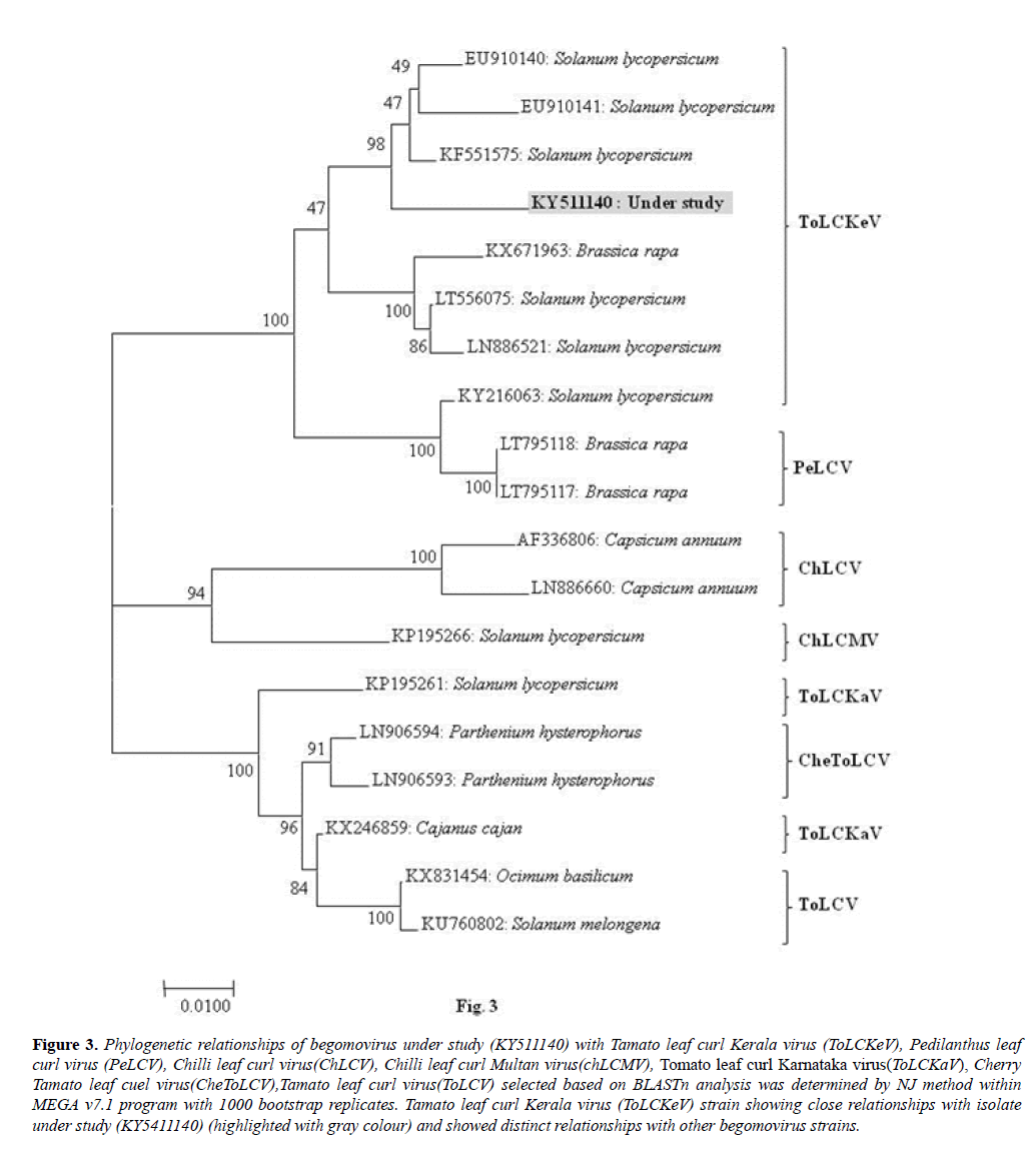 microbiology-Phylogenetic-relationships