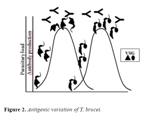 microbiology-antigenic-variation