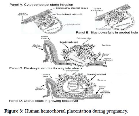 molecular-oncology-Human-hemochorial