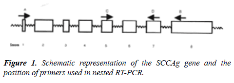molecular-oncology-Schematic-representation