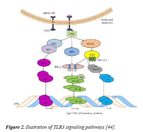 molecular-oncology-signaling-pathways