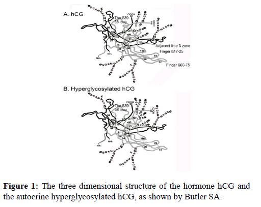molecular-oncology-three-dimensional-Butler
