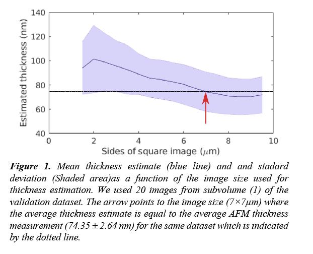 neuroinformatics-neuroimaging-thickness-estimate