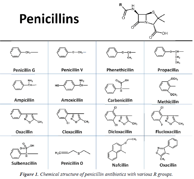 nutrition-human-health-Chemical-structure-penicillin-antibiotics