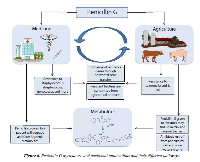 nutrition-human-health-Penicillin-medicinal-applications