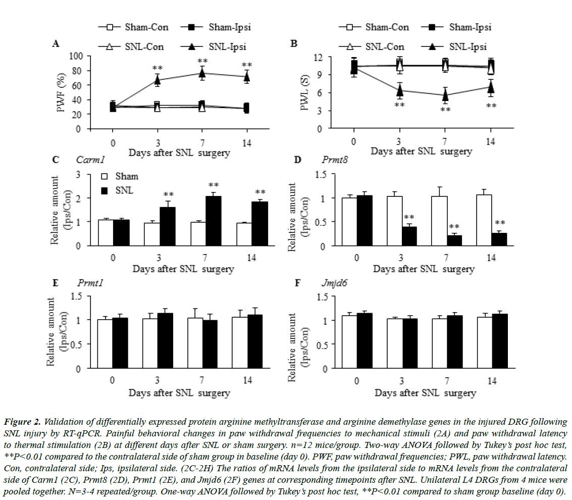nutrition-human-health-protein-arginine