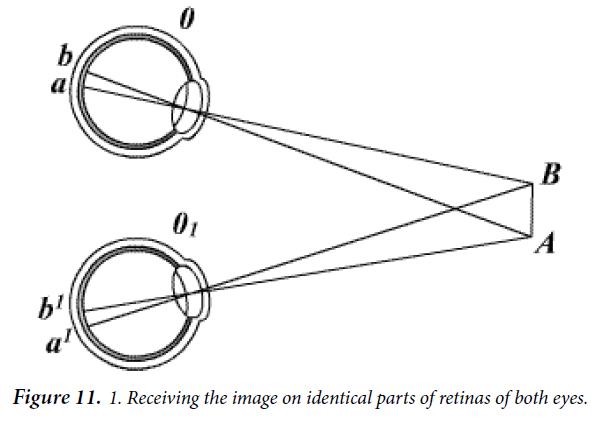 ophthalmic-eye-research-retinas-both-eyes