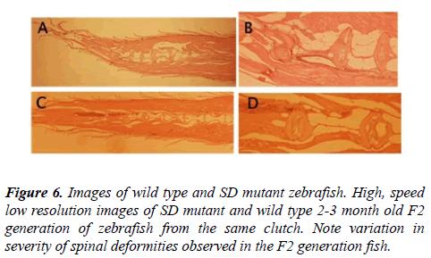 orthopedic-surgery-rehabilitation-mutant-zebrafish