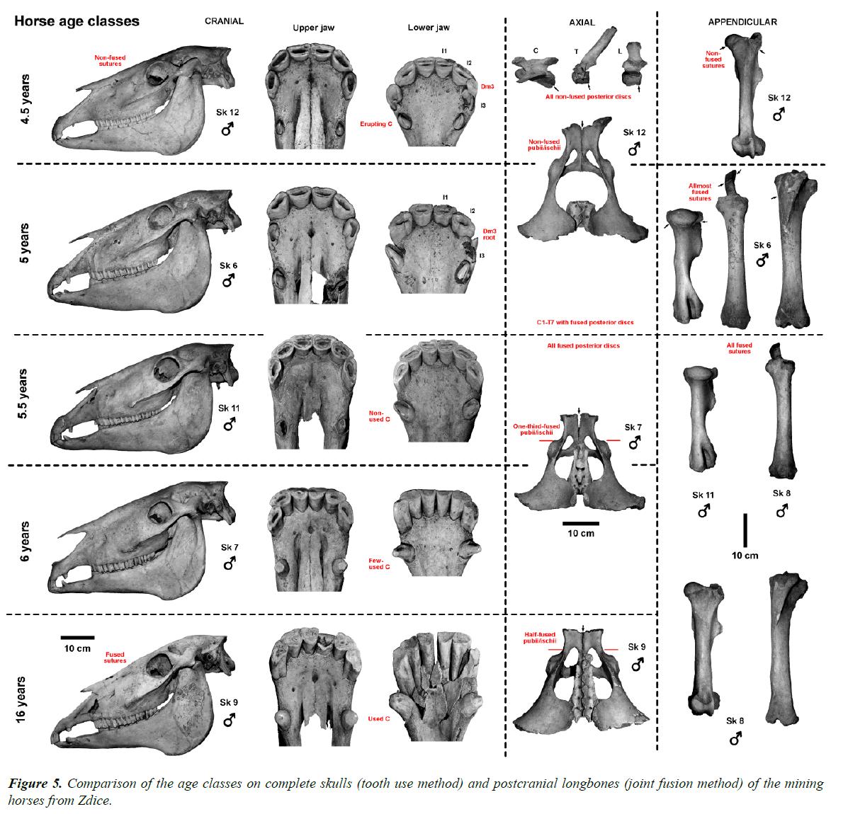 pathology-disease-biology-complete-skulls