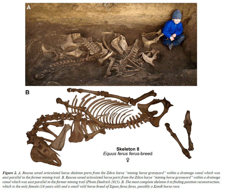 pathology-disease-biology-horse-skeleton