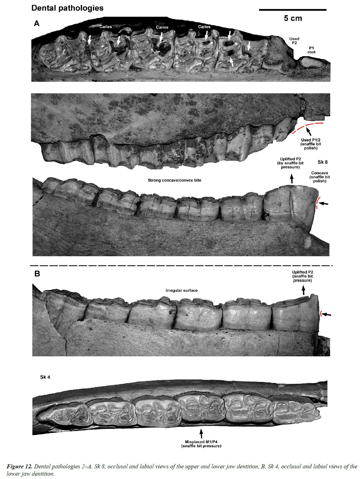 pathology-disease-biology-jaw-dentition