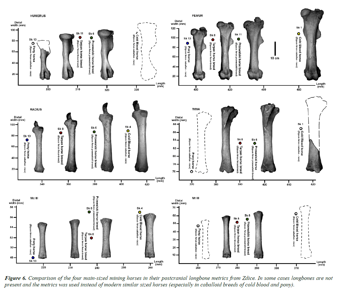pathology-disease-biology-longbone-metrics