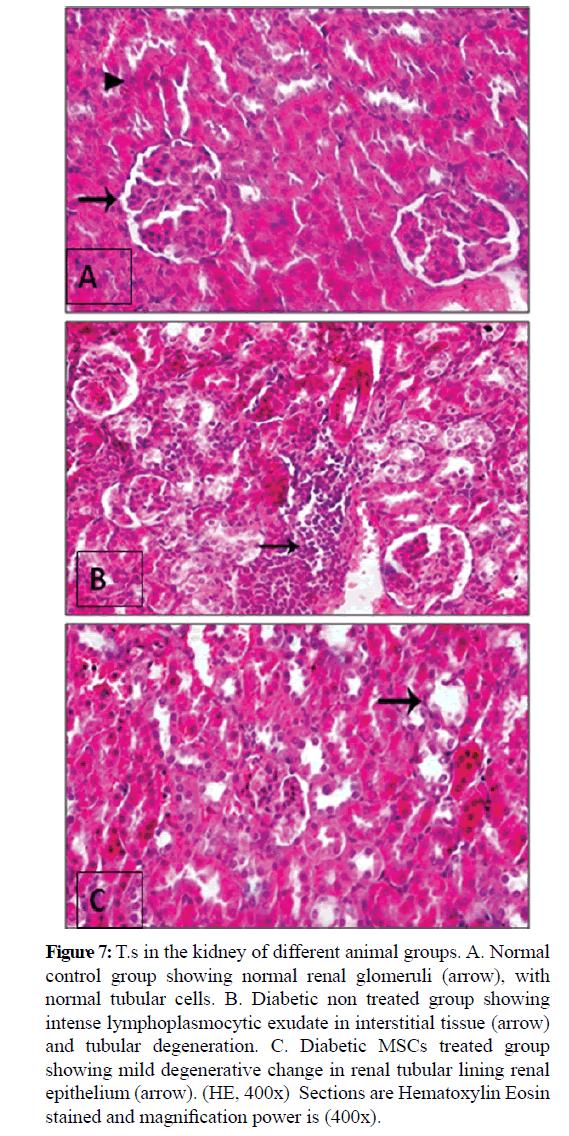 pure-applied-zoology-glomeruli
