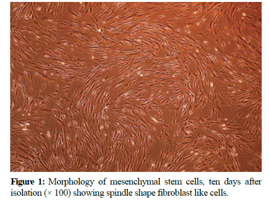 pure-applied-zoology-mesenchymal