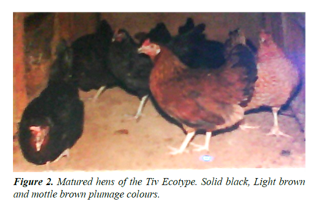 research-reports-genetics-brown-plumage-colours