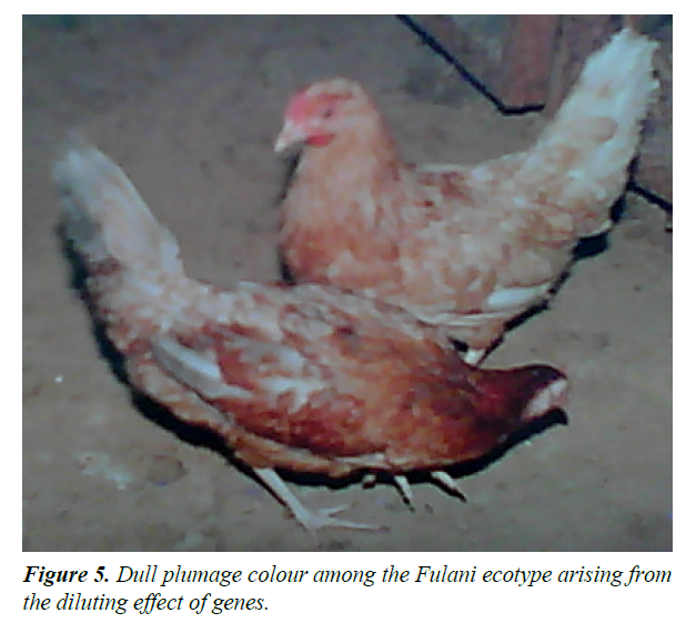 research-reports-genetics-fulani-ecotyp
