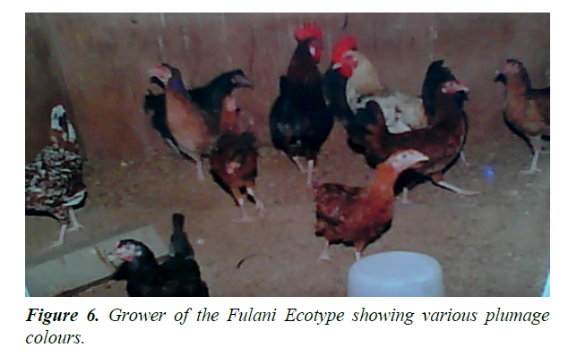 research-reports-genetics-fulani-ecotype