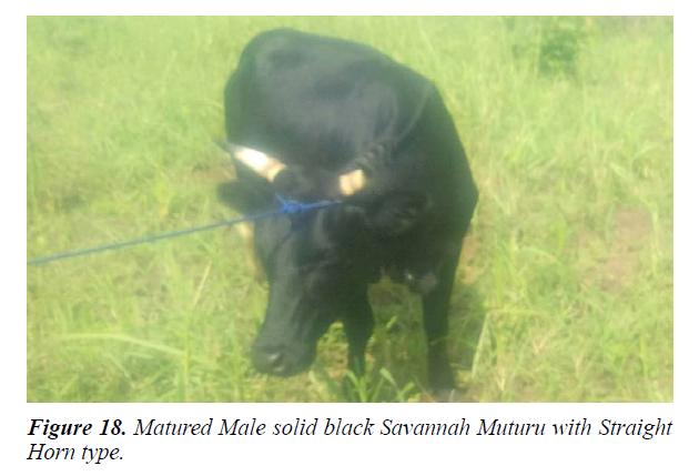 research-reports-genetics-male-savannah-mutu