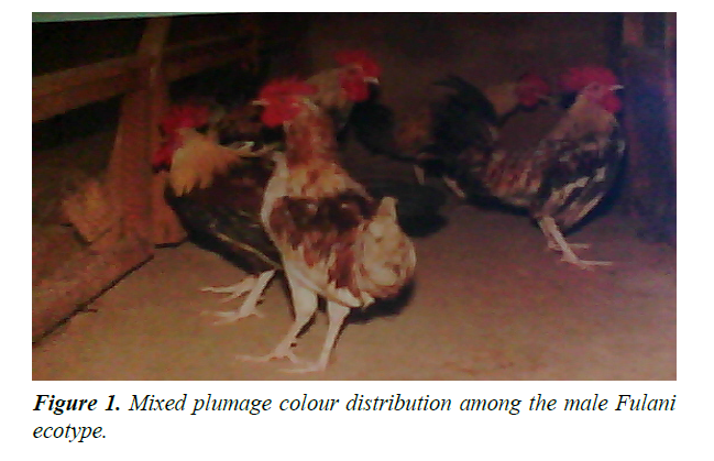 research-reports-genetics-mixed-plumage