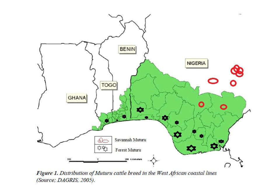 research-reports-genetics-muturu-cattle-breed