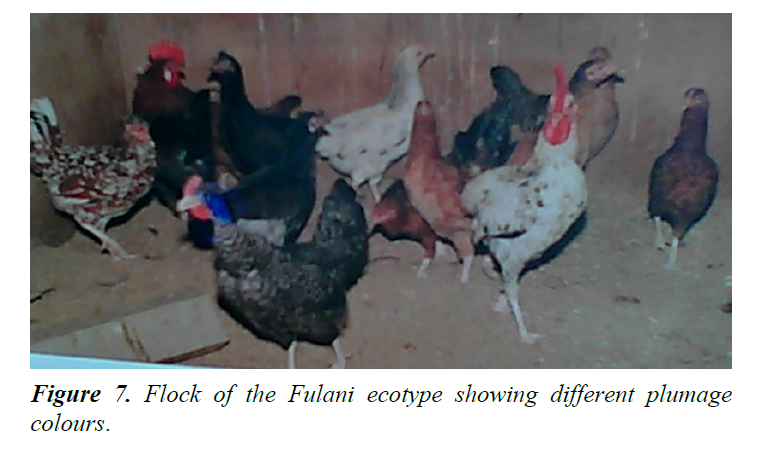research-reports-genetics-plumage-colours