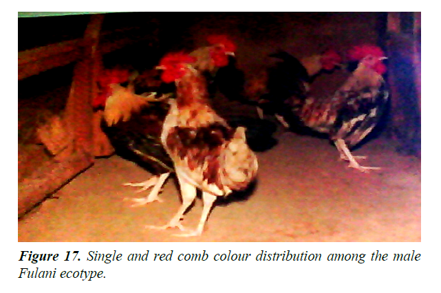 research-reports-genetics-red-comb-colour
