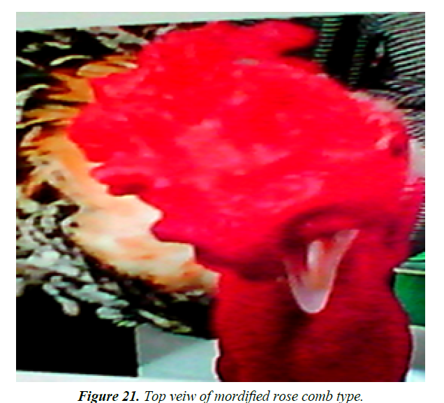 research-reports-genetics-rose-comb-type