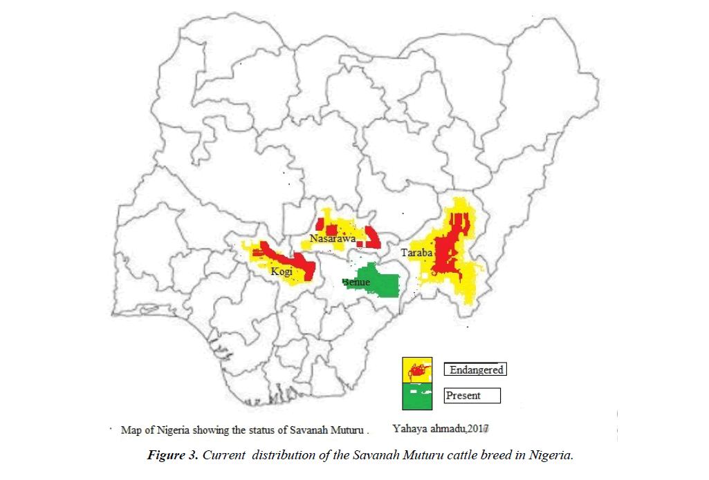 research-reports-genetics-savanah-muturu-cattle