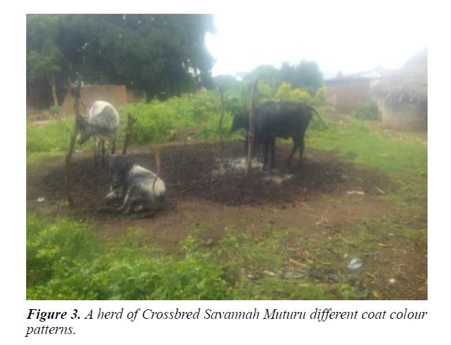 research-reports-genetics-savannah-muturu