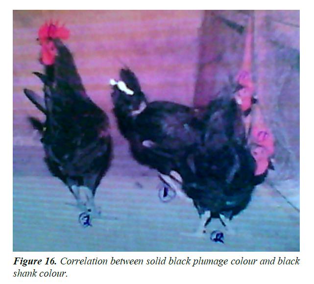 research-reports-genetics-solid-black-plumag