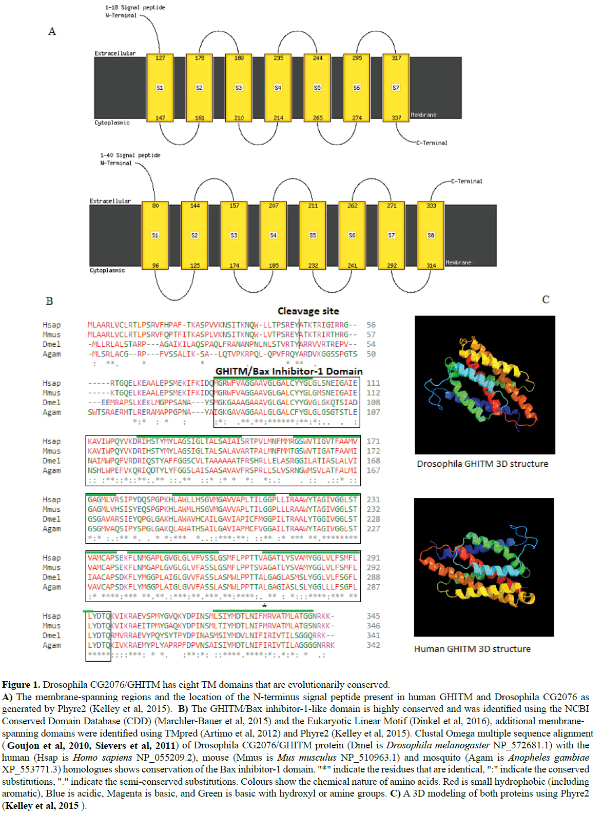 rnai-and-gene-silencing-Drosophila